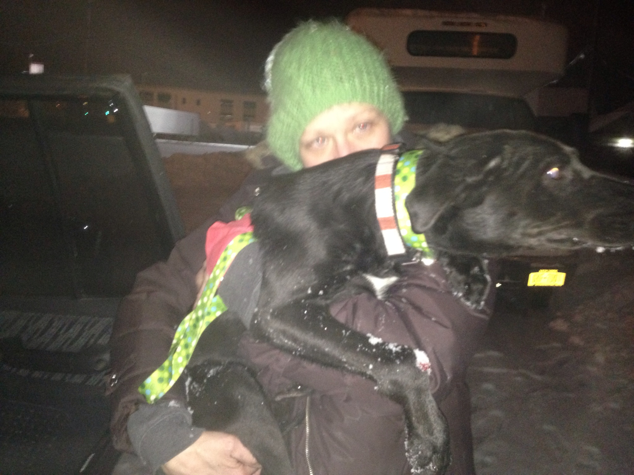 A sickly black lab being carried by a volunteer.